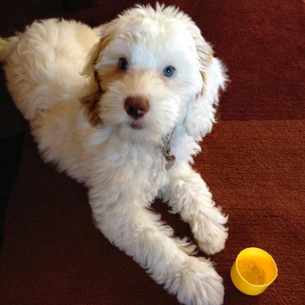 Mozzie Oliver - 3 months